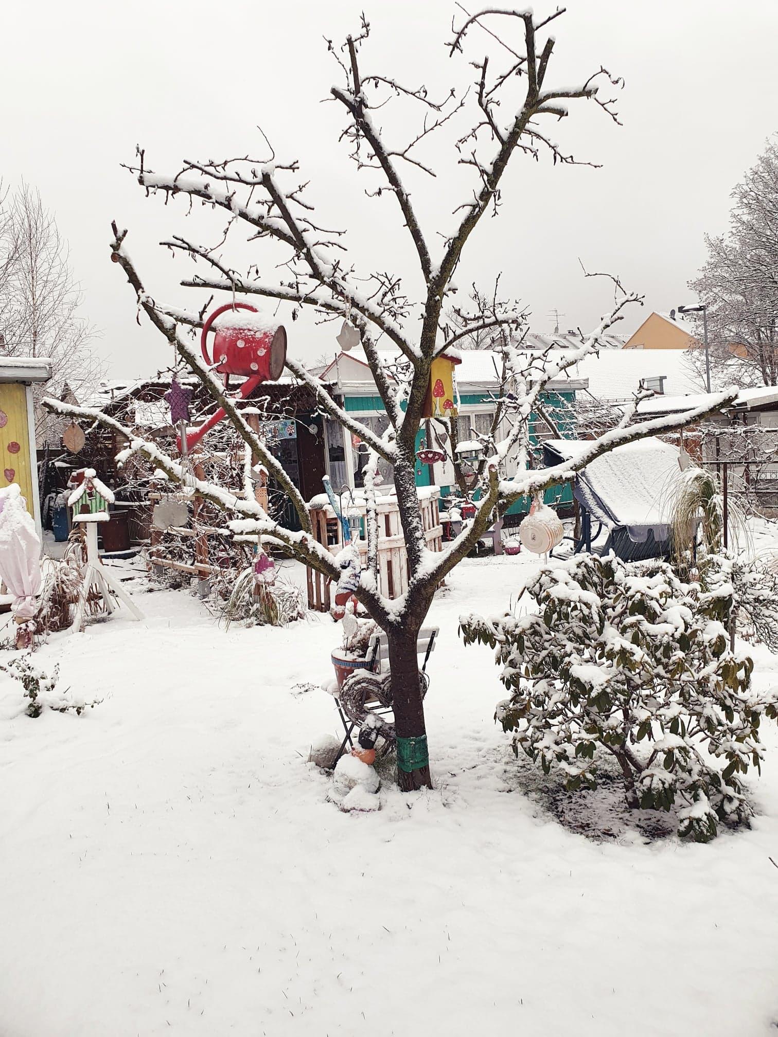 Kleingartenverein-Vereinte-Kraft Chemnitz Winterbild