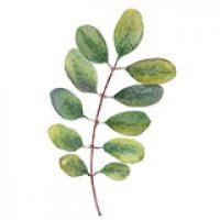 icon-leaf2.jpg